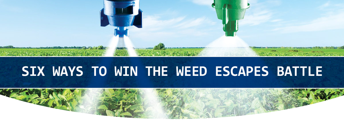 Six Ways to Win the Weed Escapes Battle